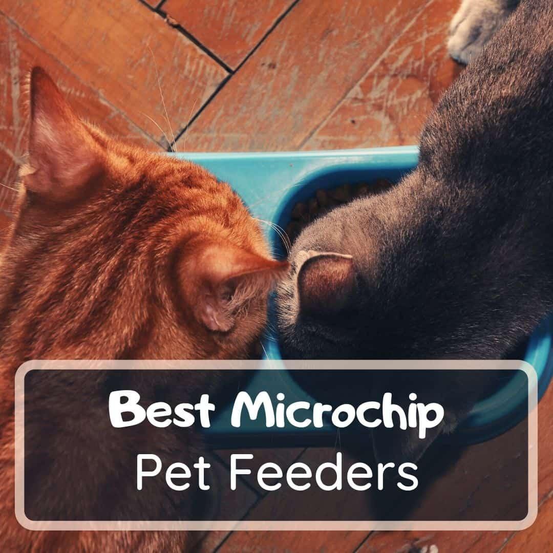 Best microchip pet feeder