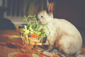 rabbit with foods