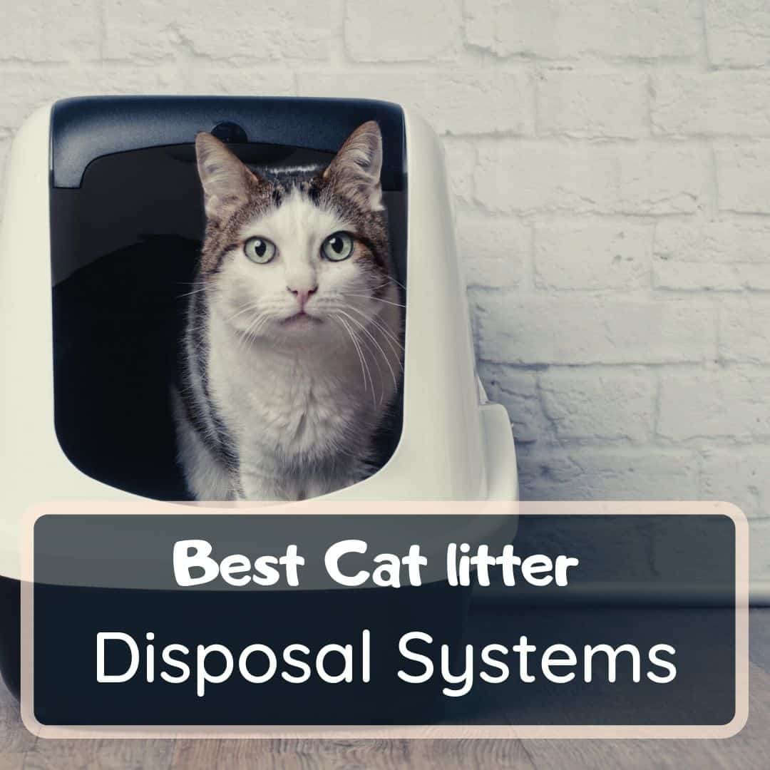 best cat litter disposal systems