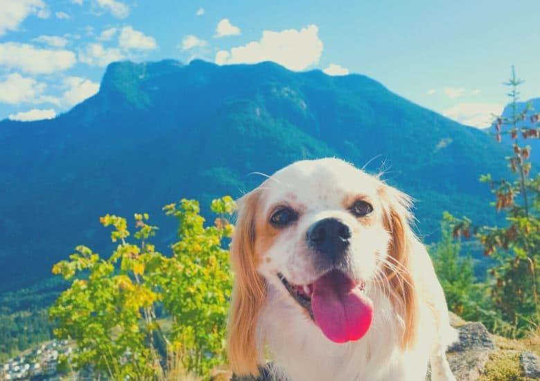 dog mountains