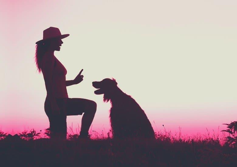 Shock collar dog training