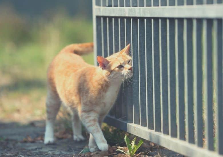 cat rubs
