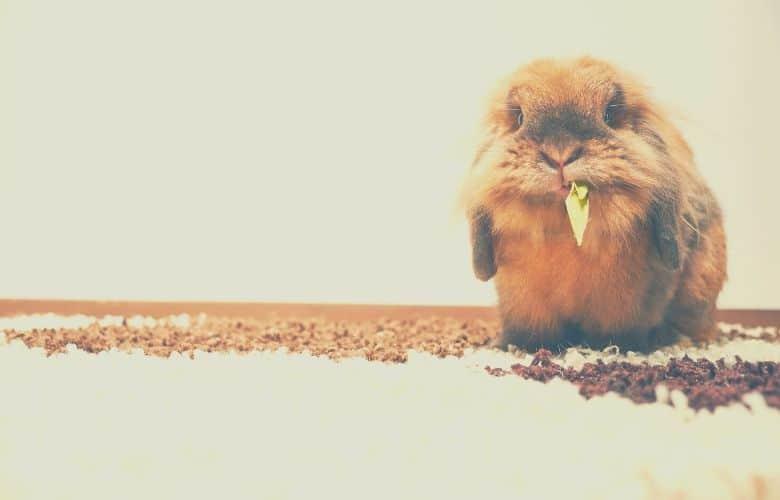 indoor rabbit cage rabbit gnaw
