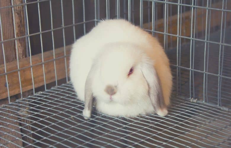 indoor rabbit cage rabbit alone