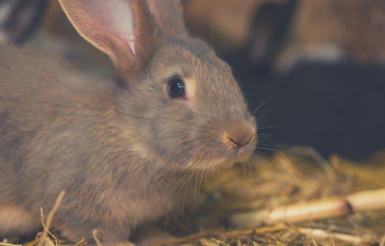 indoor rabbit cage rabbit