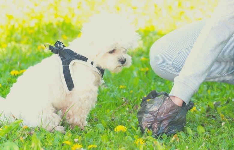 dog food for less poop