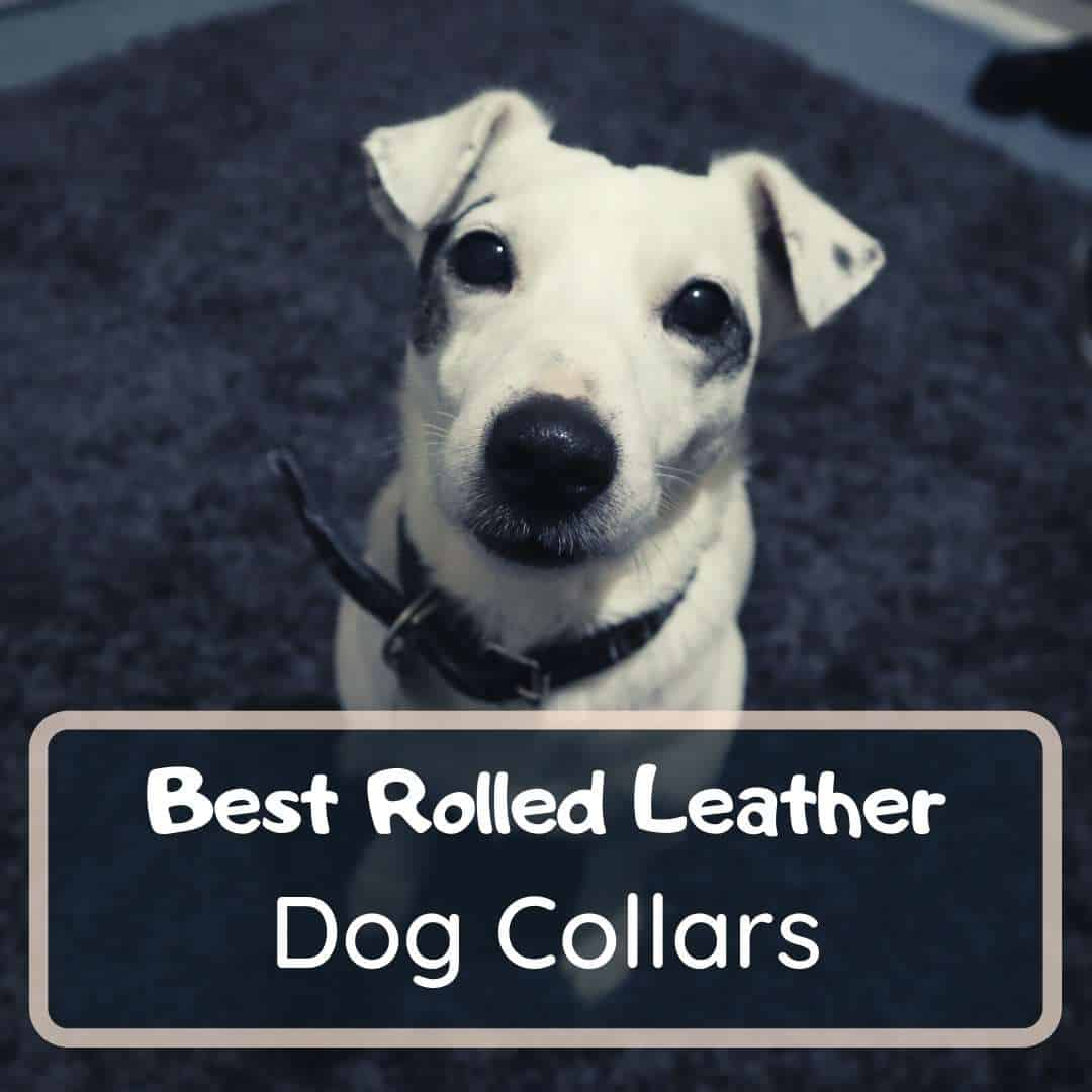 Best rolled leather dog collar