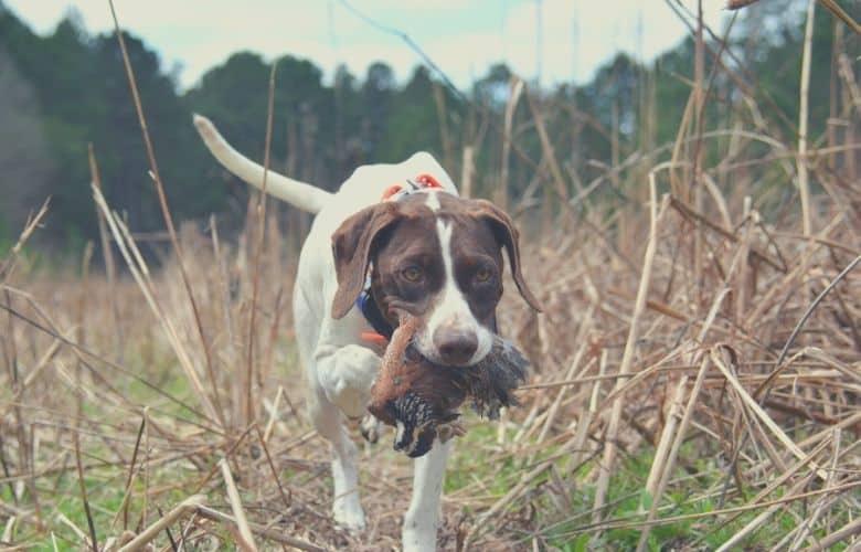 hunting dog food adult