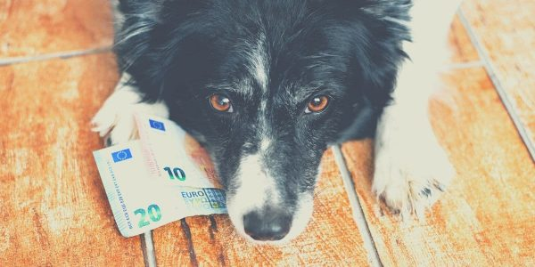 cost of a dog