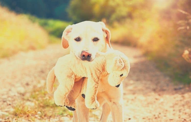 dog with plush