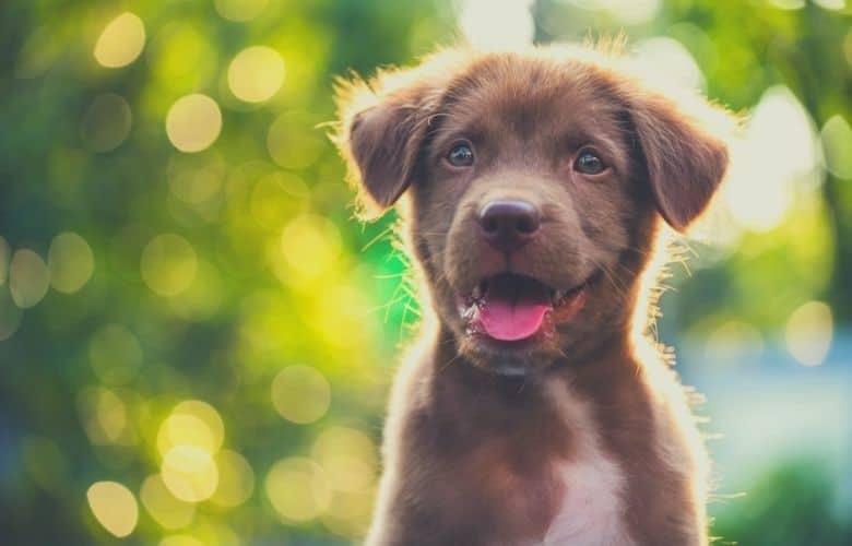 beautyful puppy