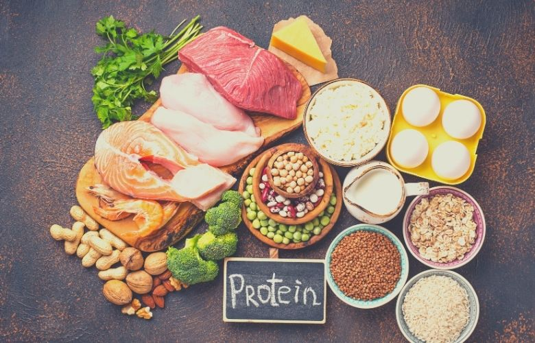 dog food recipe protein