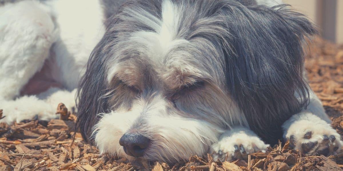 dog on mulch