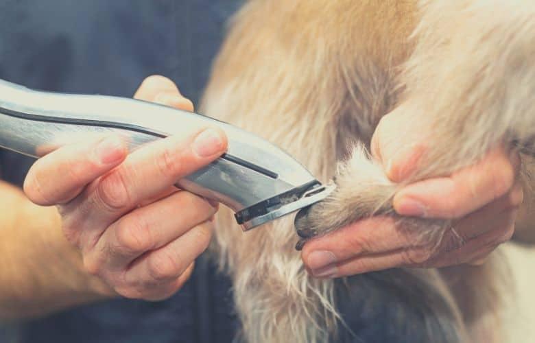 dog clipper thick coat