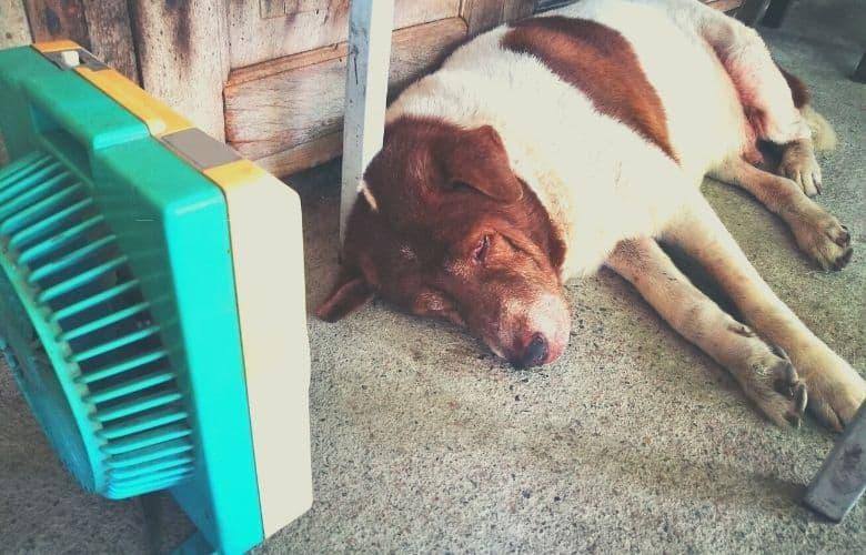 best dog crate fan