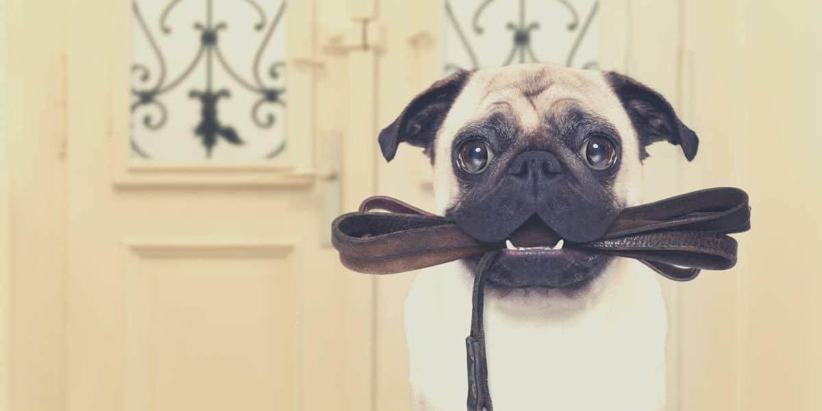 leather dog leash featured image