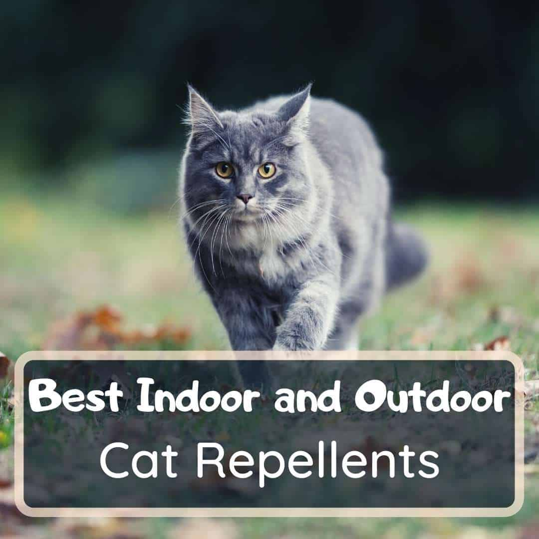 best cat repellent and deterrent