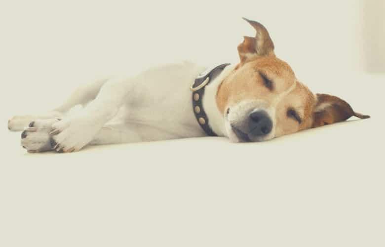 best dog food for liver disease 1
