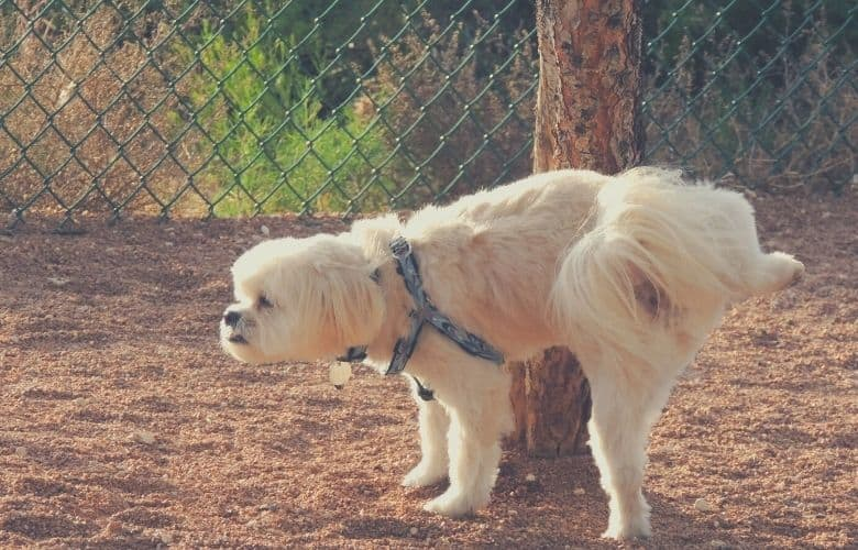 best dog food for urinary health
