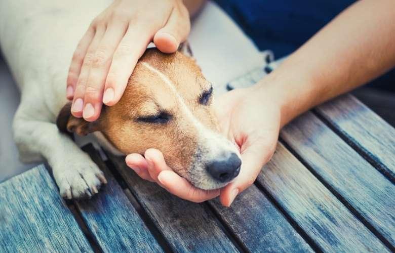Best dog food for seizures