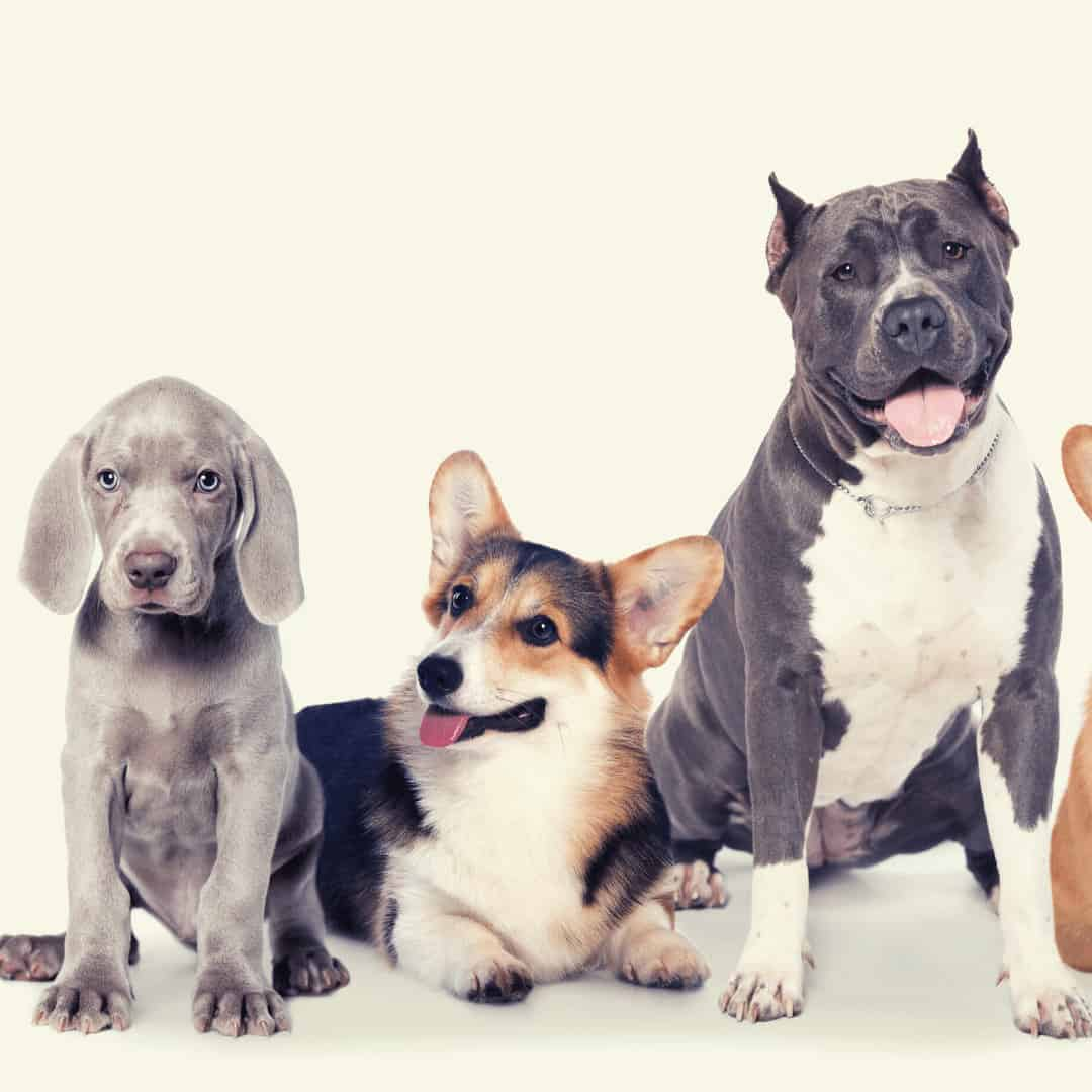 best dog food by breeds