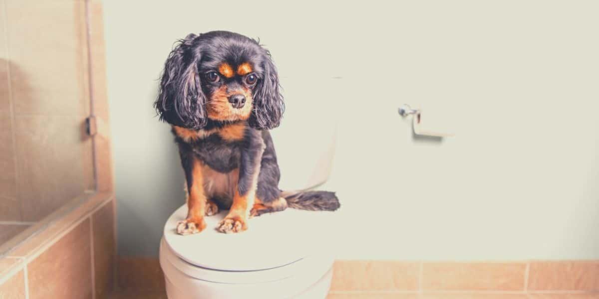 best dog food for bladder stones