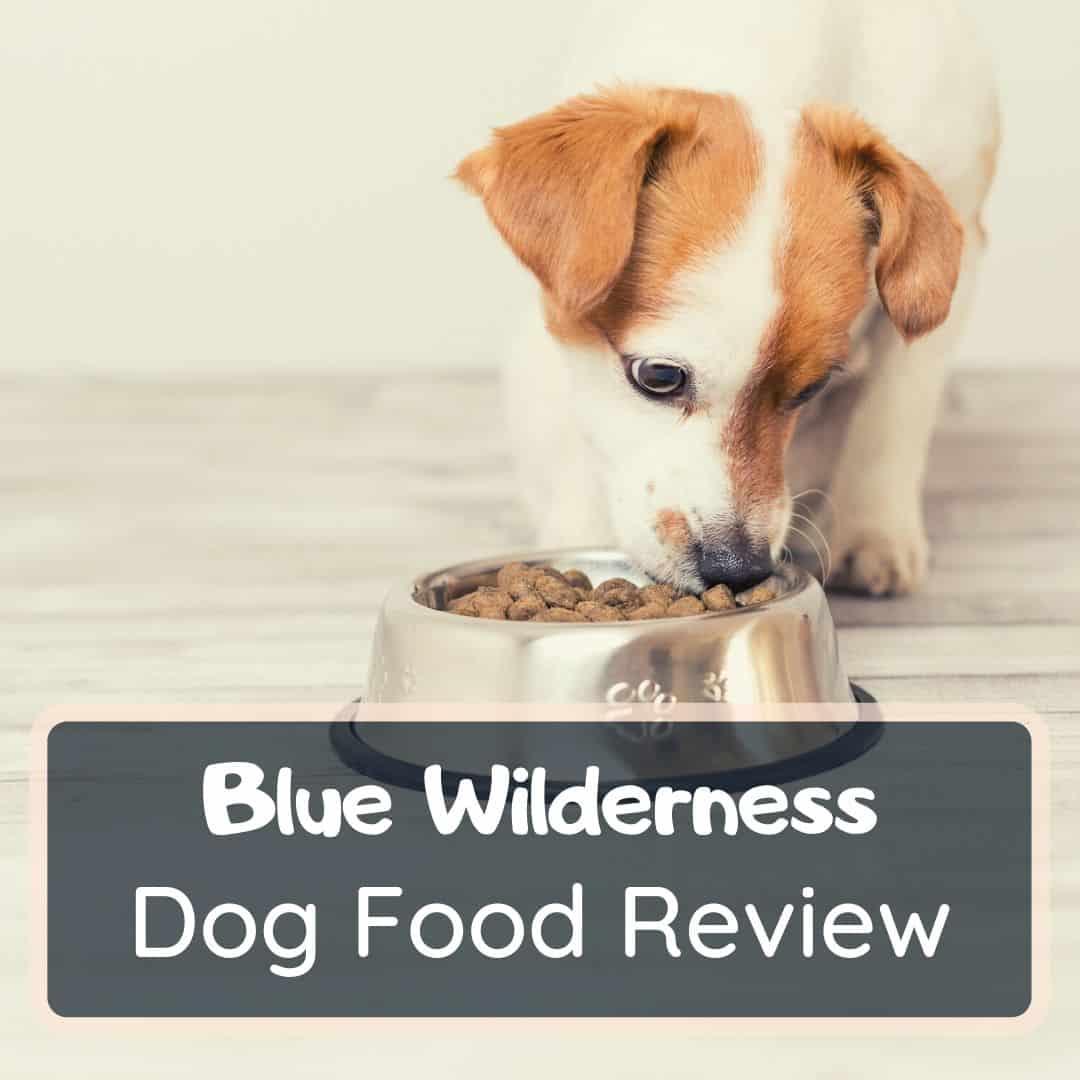 blue wilderness dog food reviews