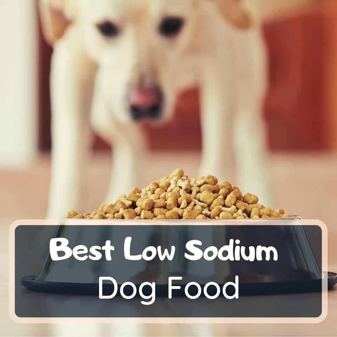 best low sodium dog food featured image