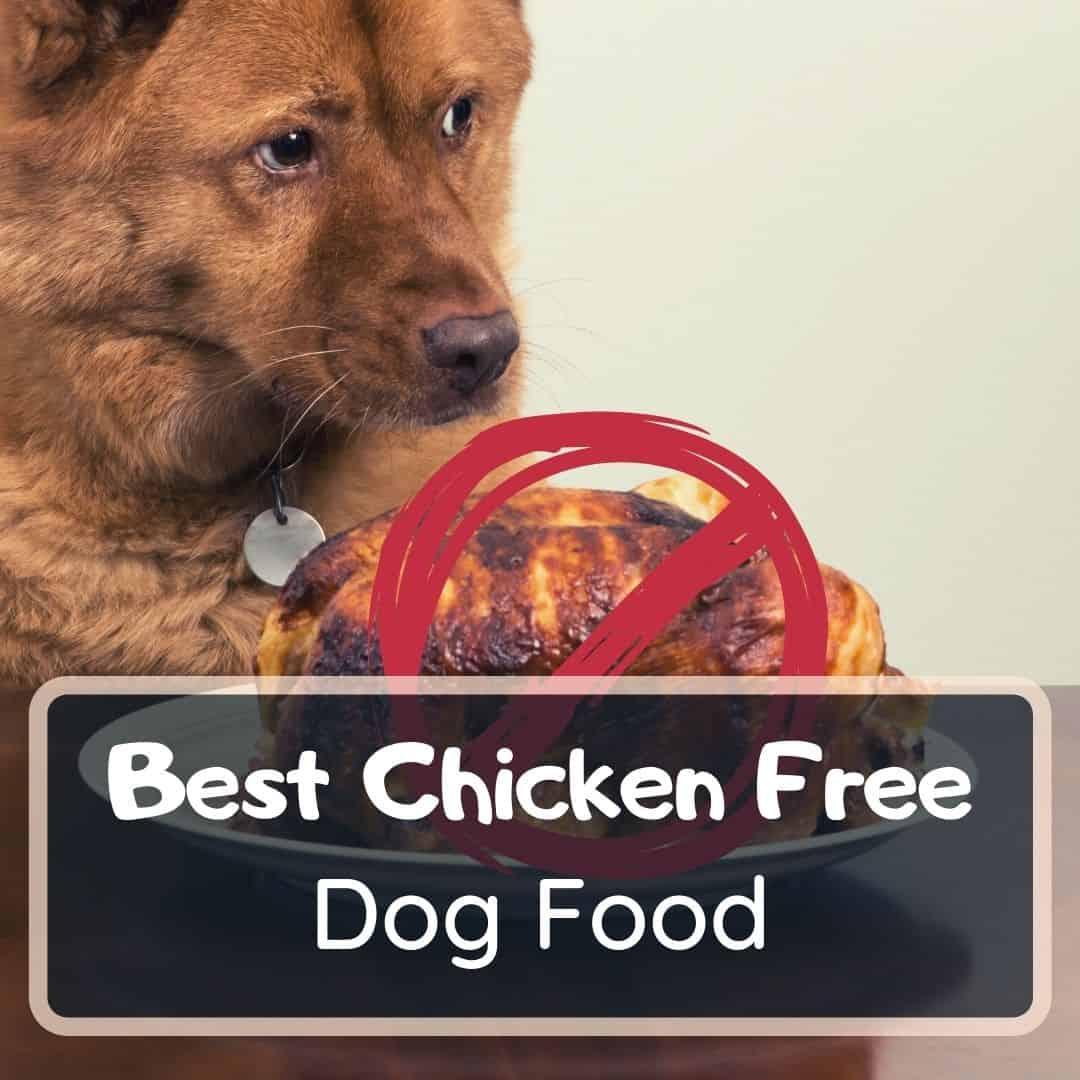 best chicken free dog food featured image