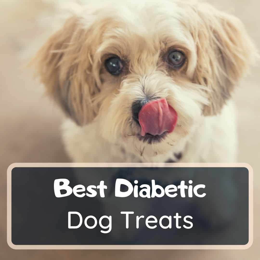 Best diabetic dog treats