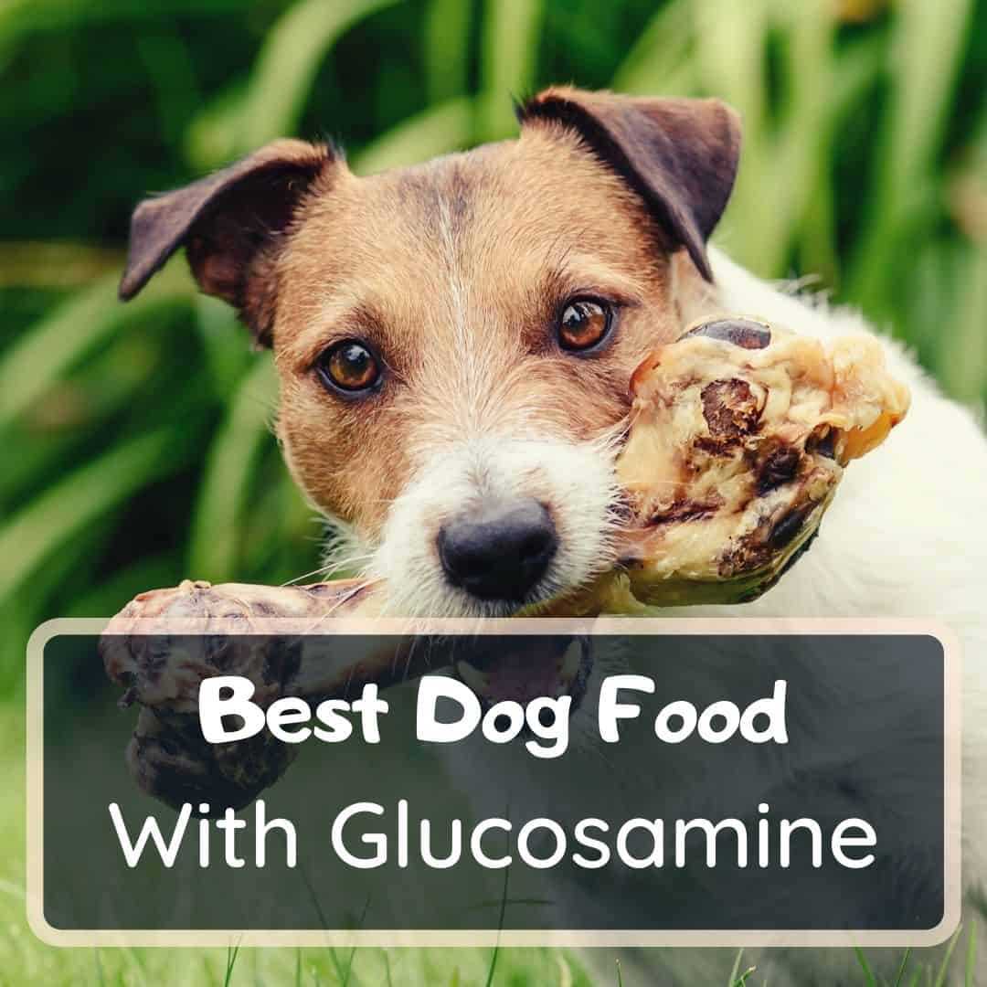 Best dog food with glucosamine and chondroitin