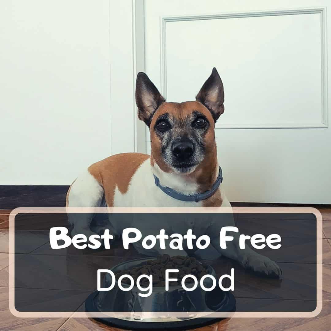 Best potato free dog food