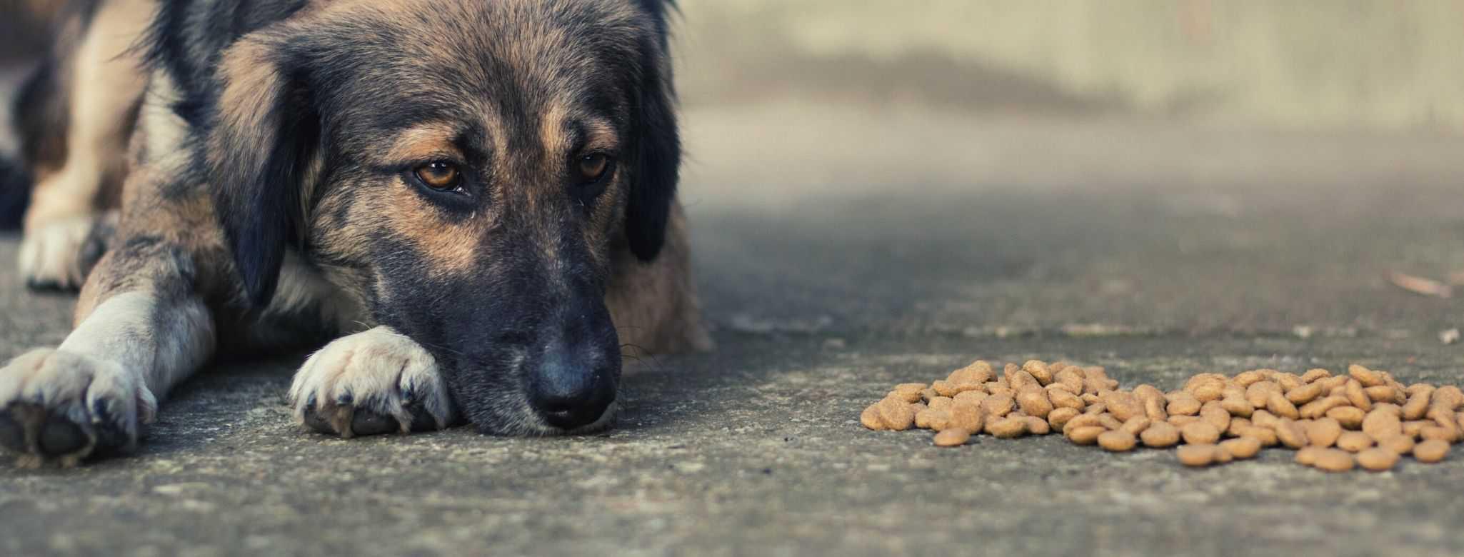 best low phosphorus dog food