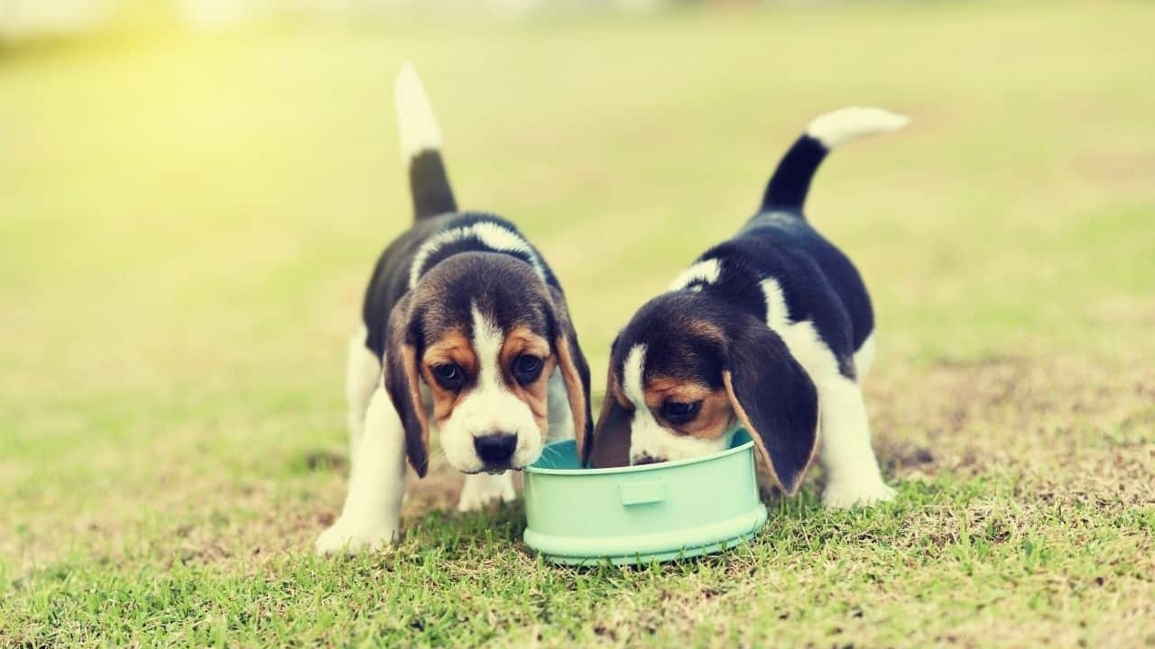 two dogs eat