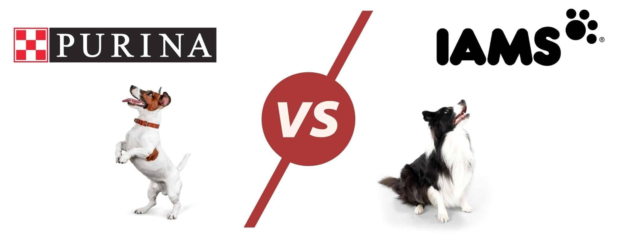 purina vs iams