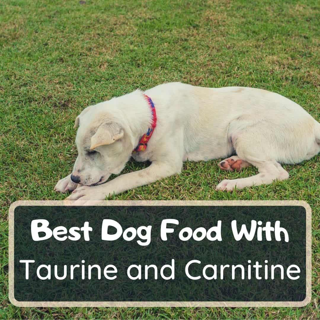 best dog foods with taurine and carnitine