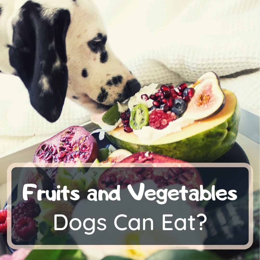 what fruits and vegetables dogs can eat