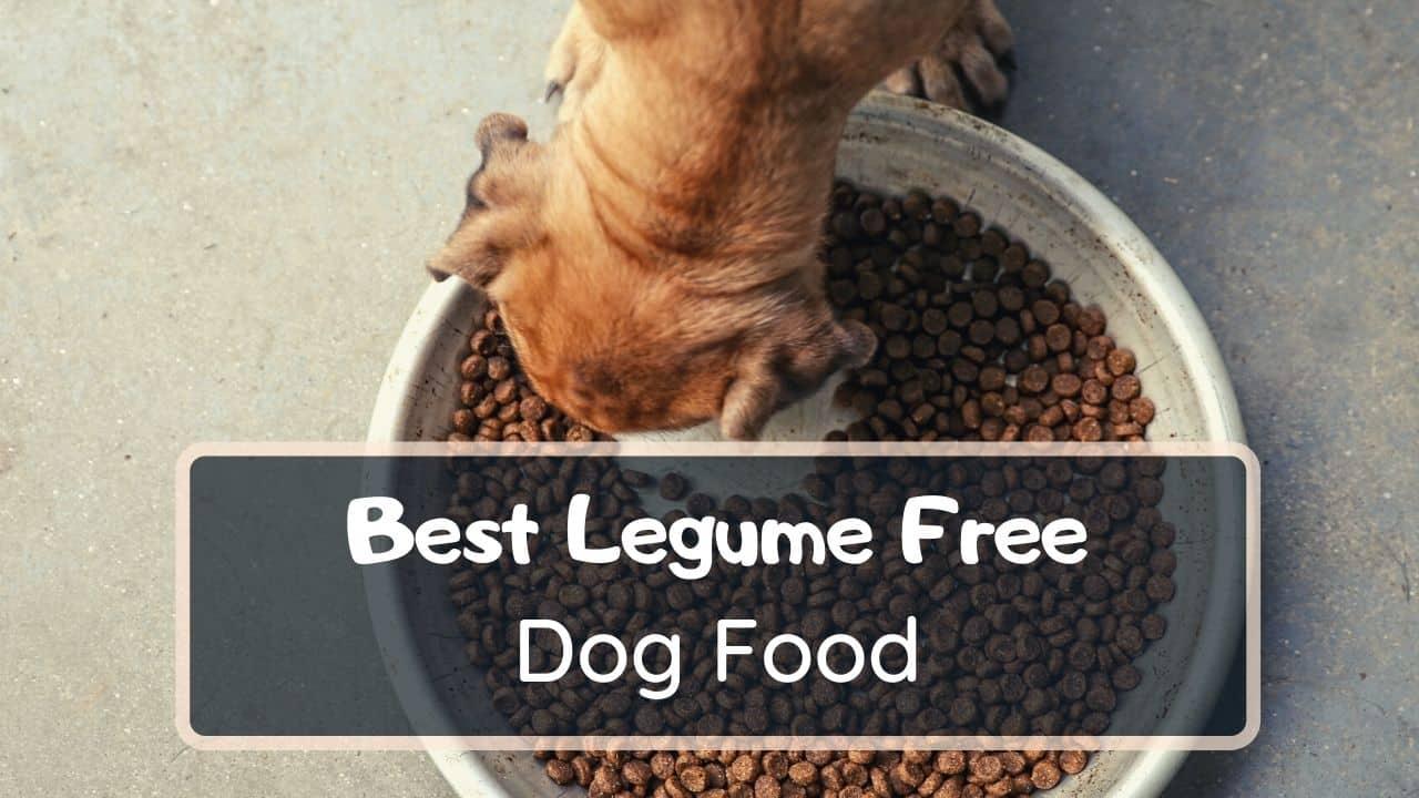 best legume free dog food