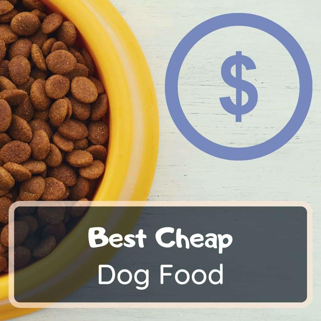 Best Cheap Dog Food