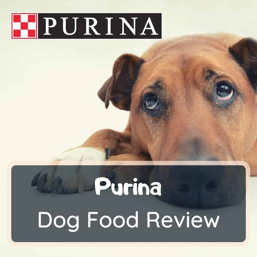 Purina Dog Food Review